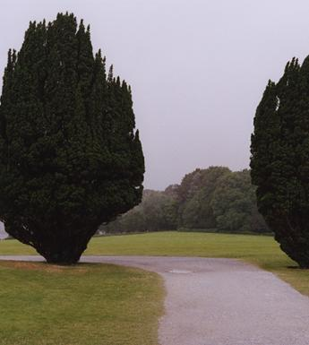 Colour photograph of a foggy landscape, with two yew trees standing either side of a gravel path running through a grassy field.