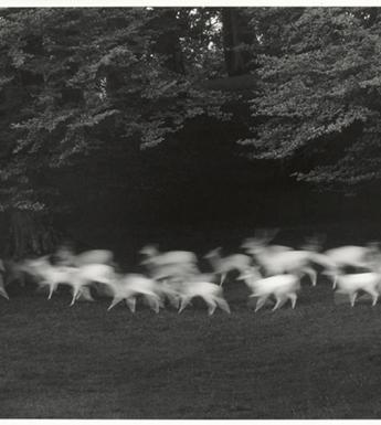 Blurred black and white photo of a herd of deer running through a forest.