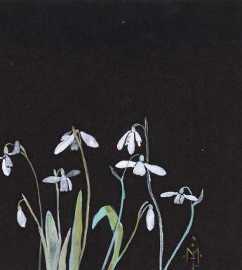 Watercolour painting of snowdrops on black paper