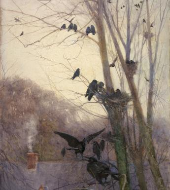 Crows in a tree