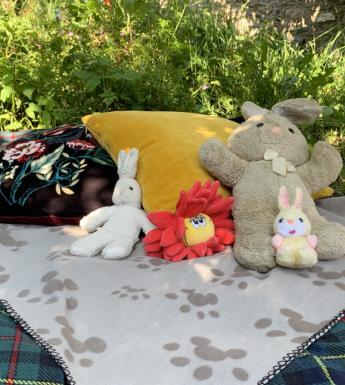 Photo of soft toys on a picnic rug outdoors
