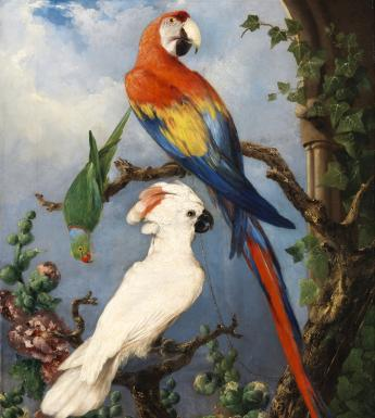 Painting of birds