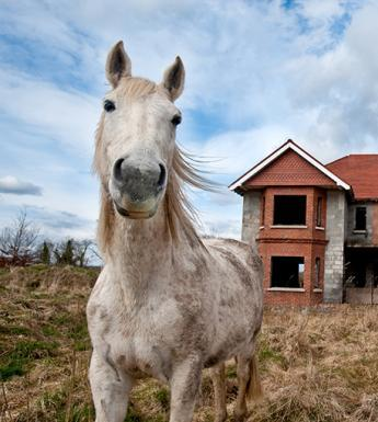 Kim Haughton's photo of horses in a ghost estate