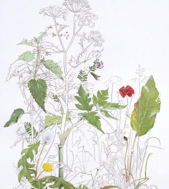 A botanical painting