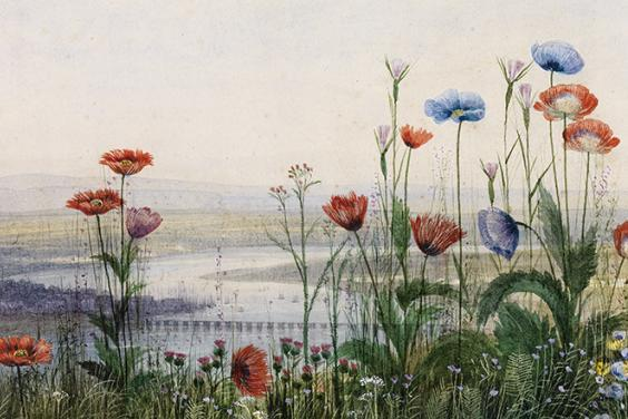 Detail of flowers in Andrew Nicholl's landscape with flowers and Londonderry