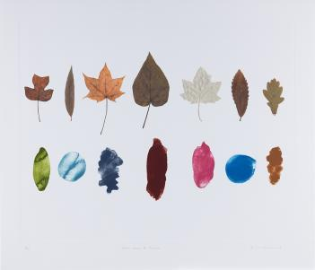 A colour etching depicting two rows of seven leaves